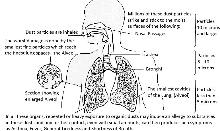 Exposure to airborne pollutants illustration